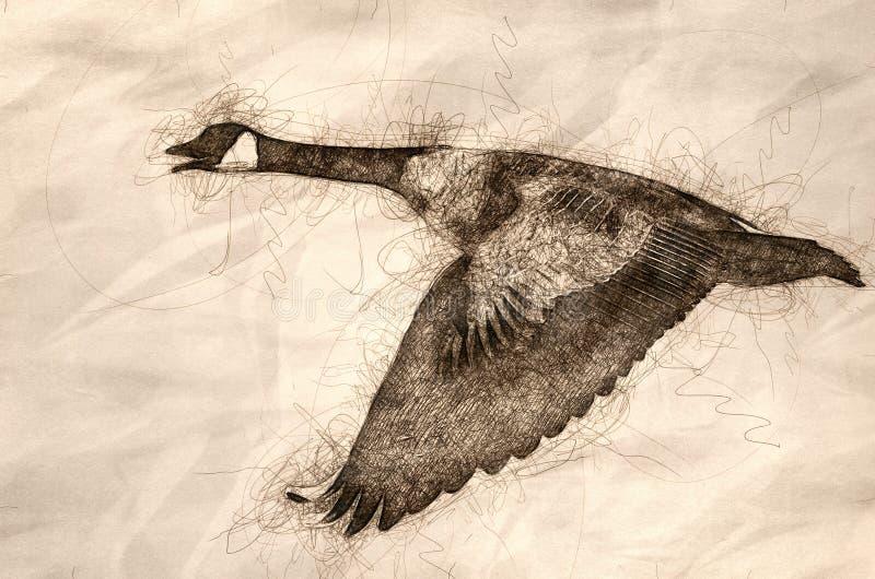 Nakreślenie Kanada Gęsi latanie w niebieskim niebie ilustracji