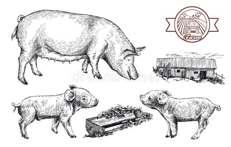 Nakreślenia świnie rysować ręką bydlę royalty ilustracja