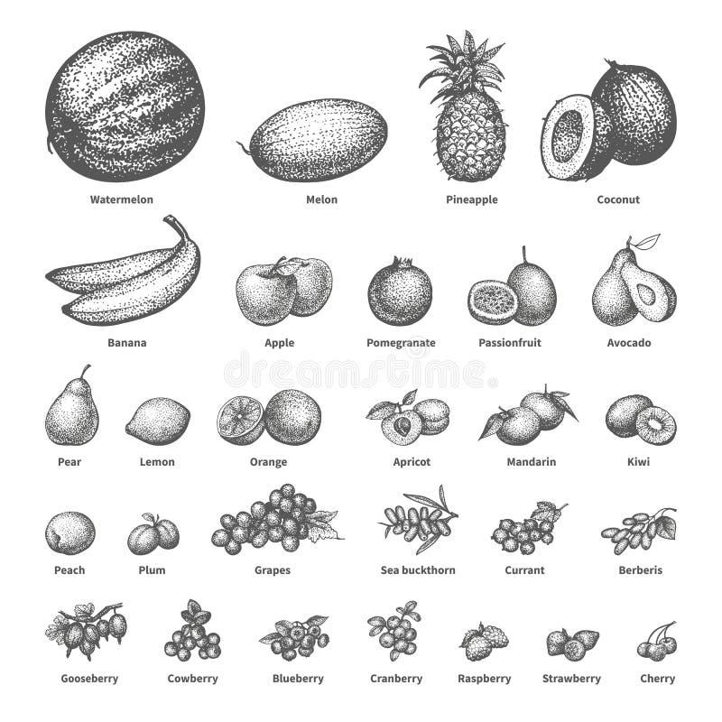 Nakreślenia doodle pociągany ręcznie ustalona owoc ilustracji