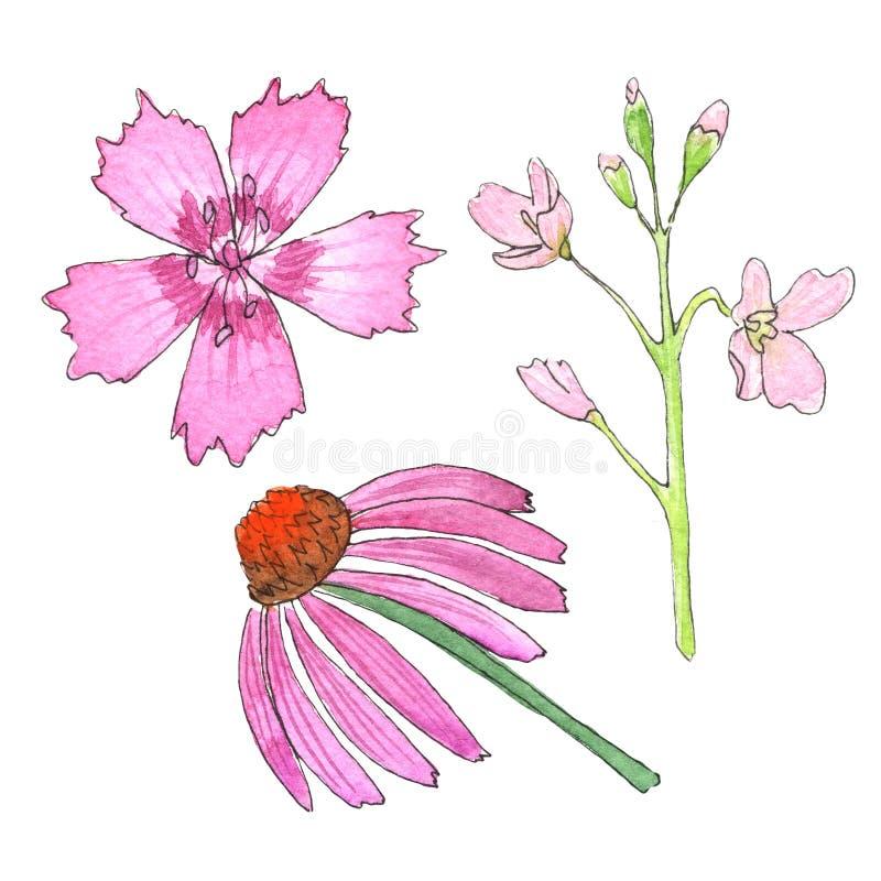 Nakreślenie dzicy kwiaty z akwarelą na białym tle ilustracji