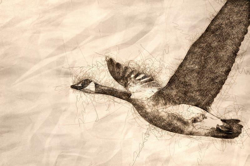 Nakreślenie Kanada Gęsi latanie w niebieskim niebie royalty ilustracja