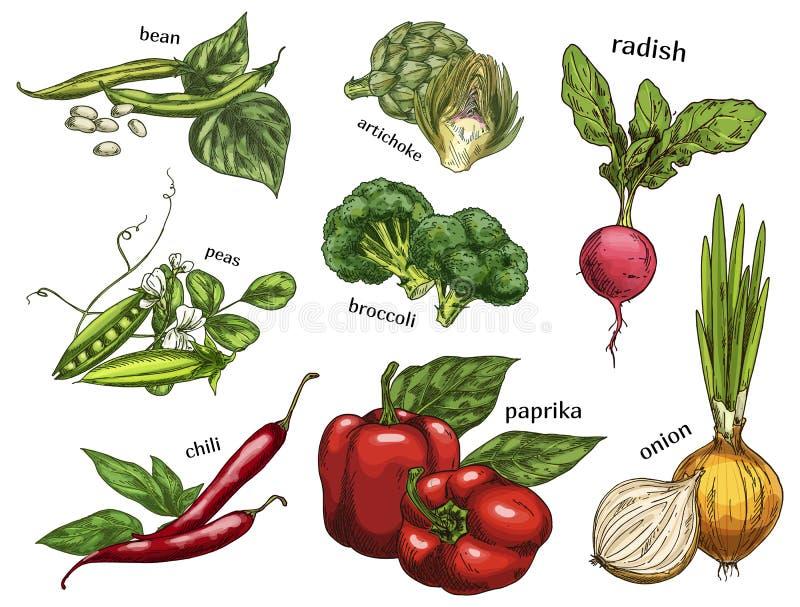 Nakreślenie karczoch i chili pieprz, grochy, fasole ilustracji