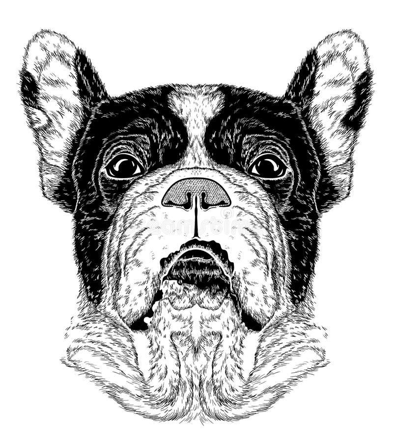 Nakreślenie portret Francuski buldog (Czarny i biały) royalty ilustracja