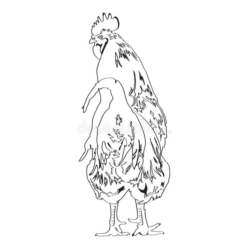 Nakreślenie rysunek kogut 4 ilustracji