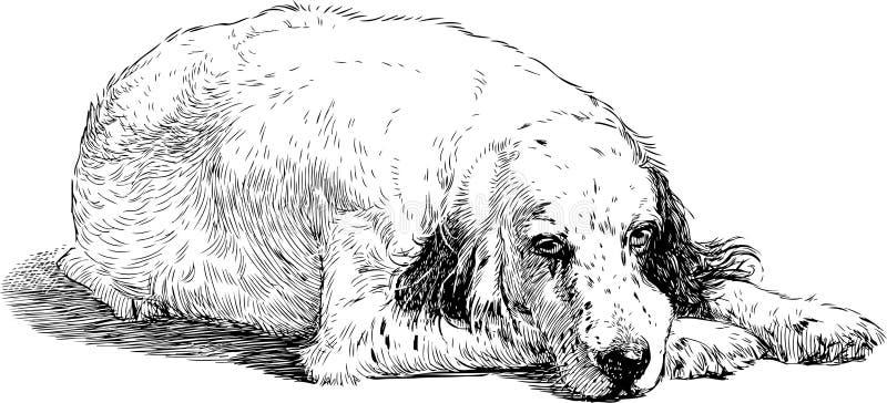 Nakreślenie smutny spaniel ilustracji