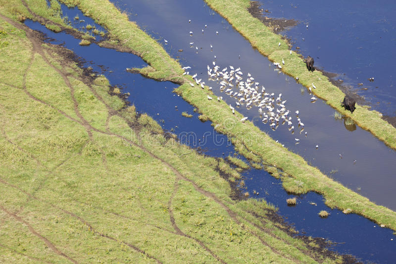 Nakuru National Park Landscape Kenya arkivbild