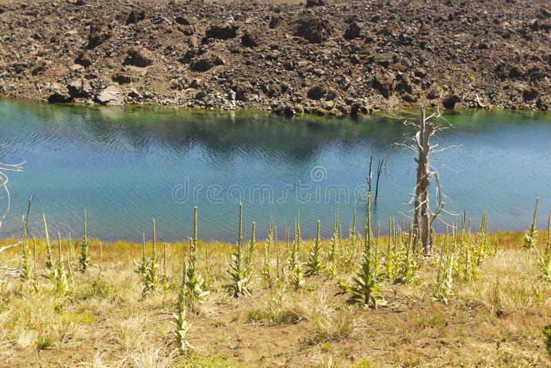 Nalcas国家储备,智利巴塔哥尼亚,智利 库存照片