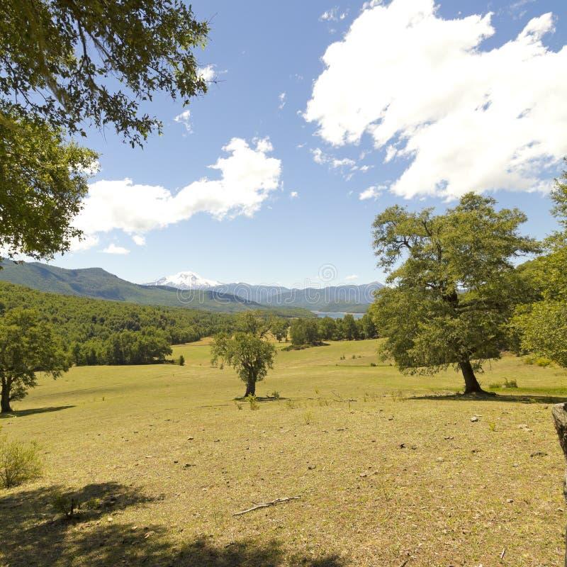 Nalcas Nationaal Park, Chili royalty-vrije stock fotografie