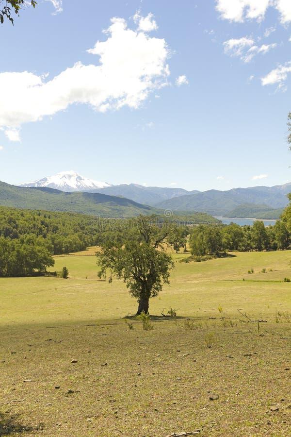 Nalcas Nationaal Park, Chili royalty-vrije stock afbeeldingen