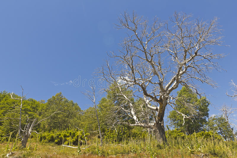 Nalcas Nationale Reserve, Chileens Patagonië, Chili royalty-vrije stock foto's