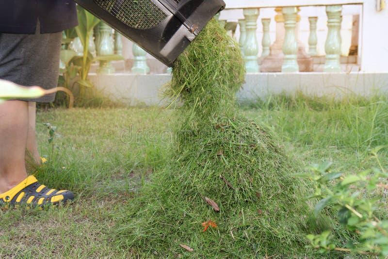 Nalewa trawy jest rżnięty krótki utrzymywać je z pudełka w kosiarzie Nalewa w stos wpólnie fotografia stock