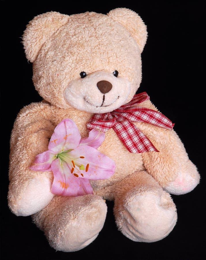 nalle för björnblommalilja arkivfoto