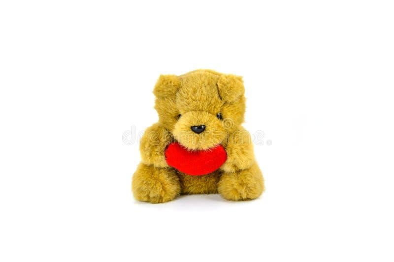 nalle för björnhjärtaholding royaltyfri fotografi