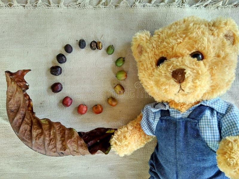 Nallebjörn och coffebönaprocess royaltyfri fotografi