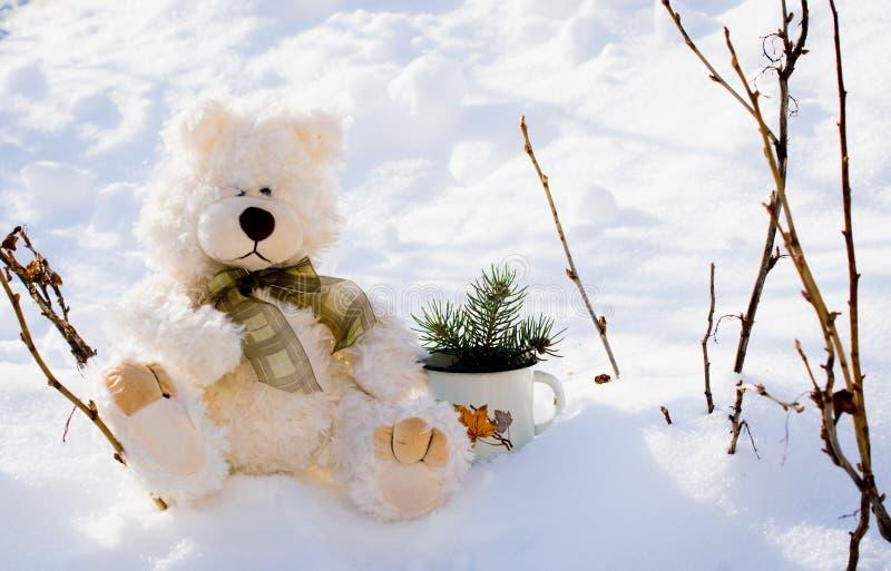 Nallebjörnar i wintergardenen royaltyfri foto