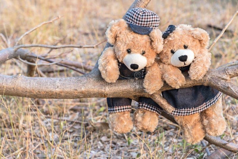 Nallebjörnar som hänger på en filial royaltyfri foto
