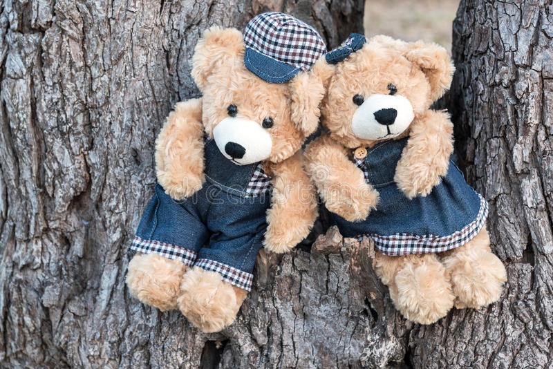 Nallebjörnar som sitter på ett träd fotografering för bildbyråer