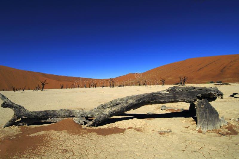 Namíbia fotografia de stock royalty free