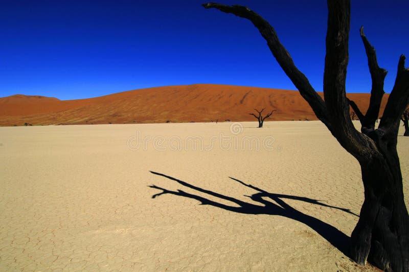 Namíbia imagens de stock