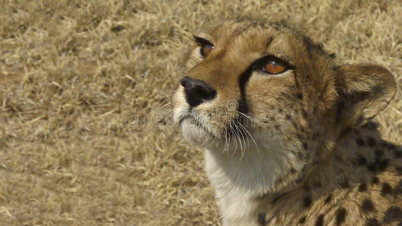 Namíbia, parque de Etosha foto de stock royalty free