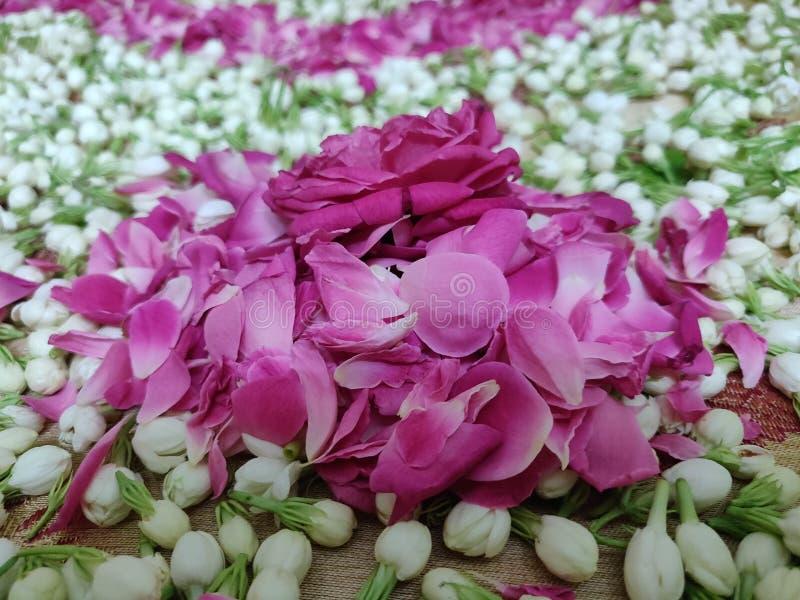 Nam bloem, bloemblaadjes en jasmijnclose-up toe stock afbeelding