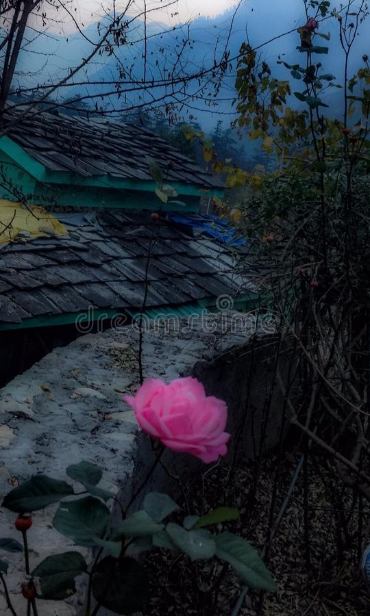 Nam bloem en in mist vroege ochtend in Himalayagebergte toe stock foto's