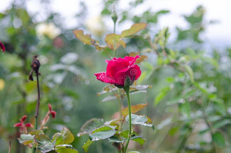 Nam bloem op aardachtergrond toe stock foto