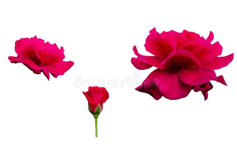 Nam bloem op witte achtergrond toe stock fotografie