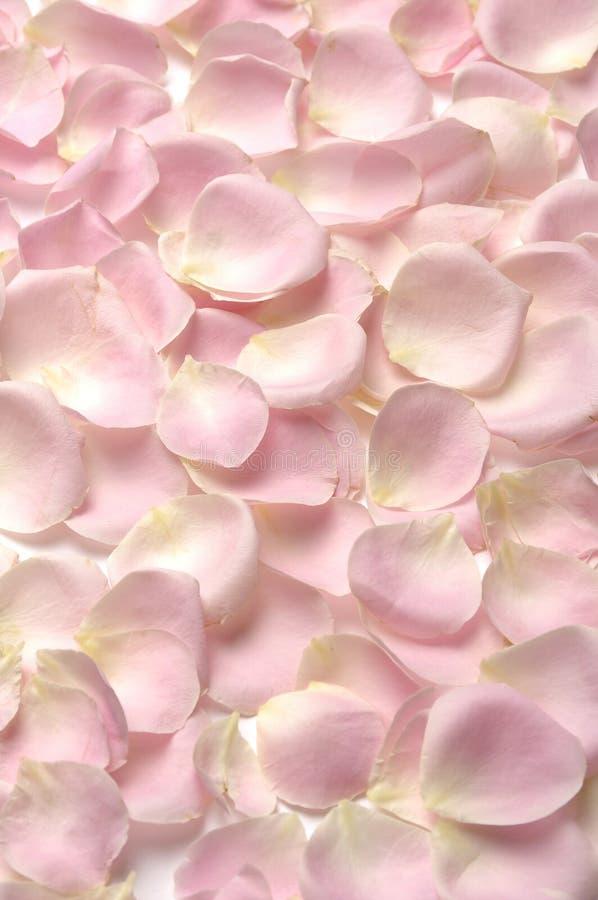 Nam bloemblaadjes toe royalty-vrije stock afbeeldingen