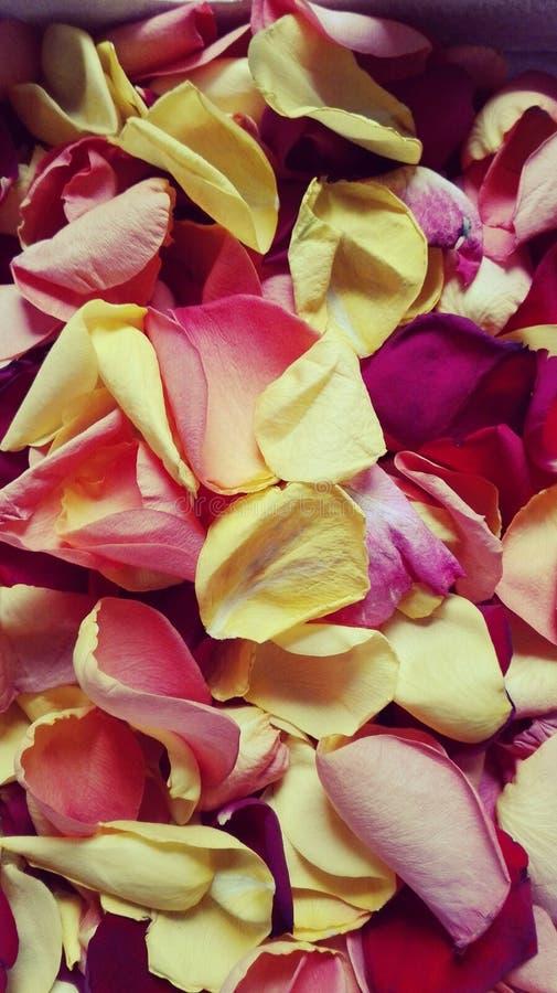 nam bloemblaadjes toe royalty-vrije stock afbeelding