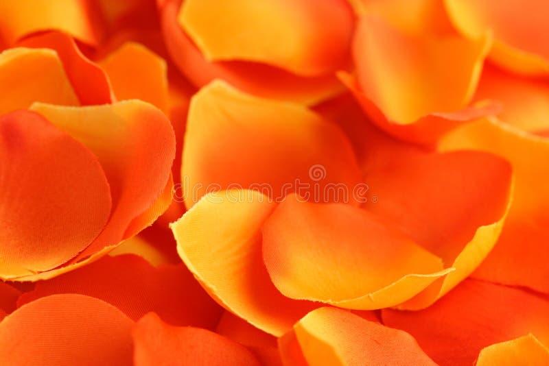 Nam bloemblaadjesachtergrond toe stock foto