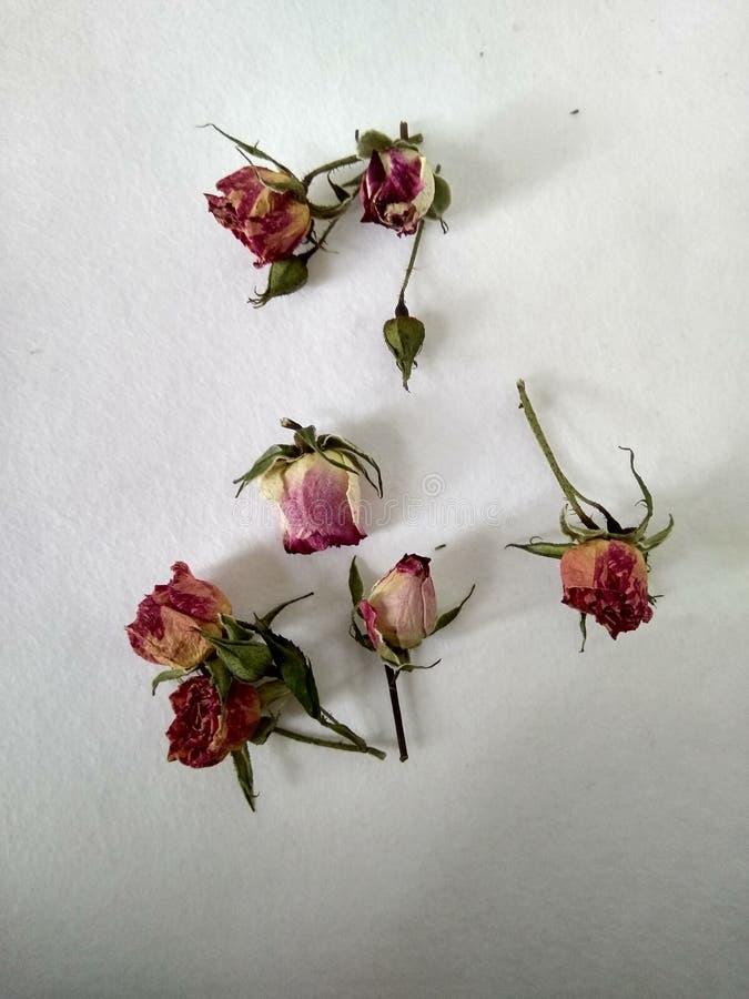 Nam bloemen in de loop van de dag op wit gevoelde achtergrond toe royalty-vrije stock foto
