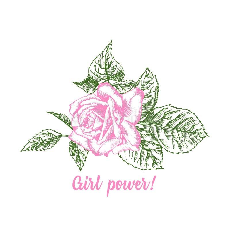 Nam bloemschets in gravurestijl op witte achtergrond toe Roze en groene kleur T-shirtdruk Een vectorillustratie Typografieontwerp royalty-vrije illustratie