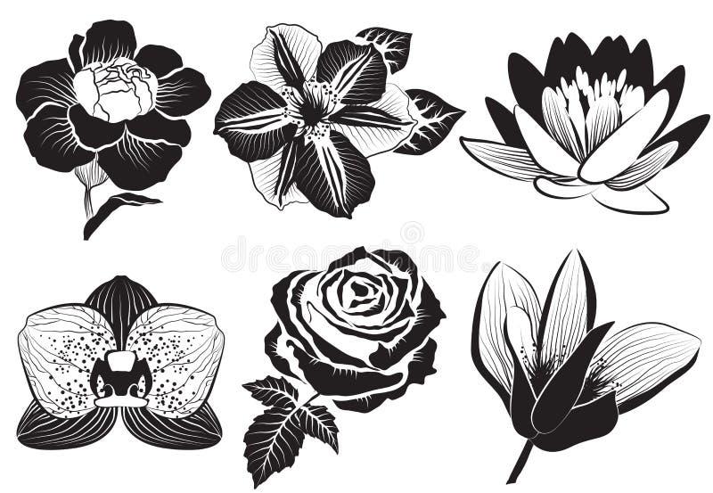 Nam, clematissen, orchidee, waterlelie, lotusbloem, anjer en magnoli toe stock illustratie