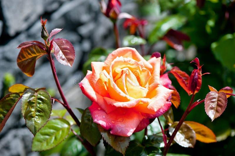 Nam in de tuin toe royalty-vrije stock fotografie