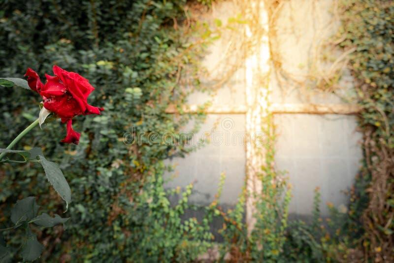 Nam dichtbij het venster met klimplant toe royalty-vrije stock afbeelding