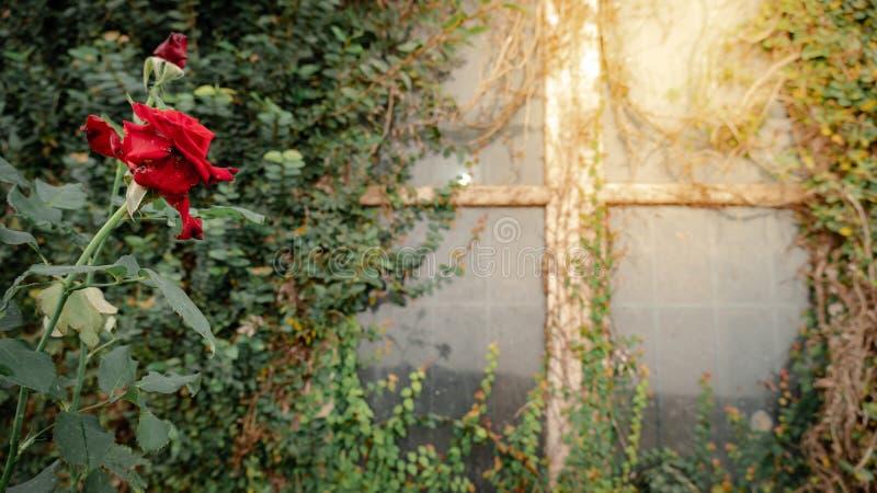Nam dichtbij het venster met klimplant toe royalty-vrije stock fotografie