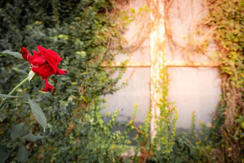 Nam dichtbij het venster met klimplant toe royalty-vrije stock afbeeldingen