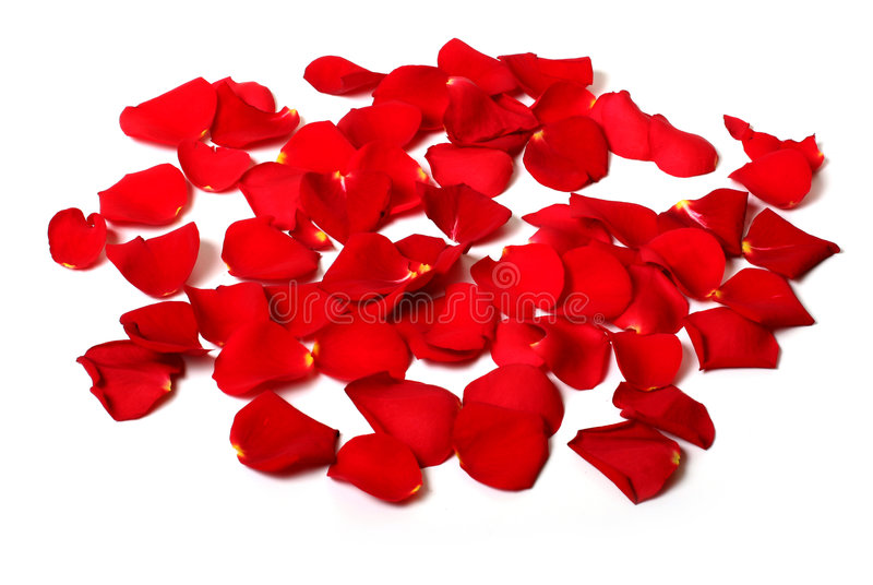 Nam geïsoleerdee bloemblaadjes toe stock foto