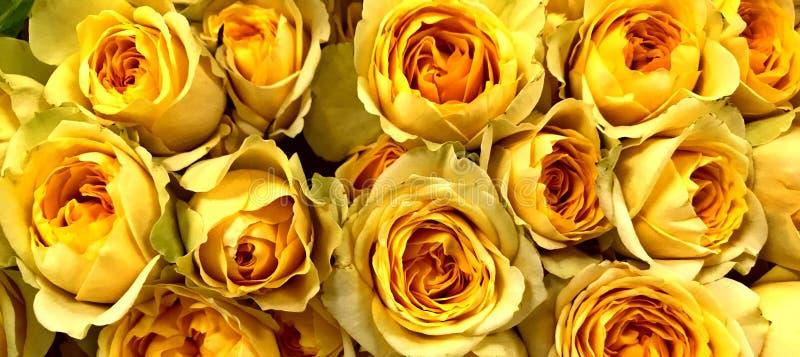 Nam, Geel, Bloemenboeket, a-wenk van rood op de uiteinden toe stock afbeeldingen