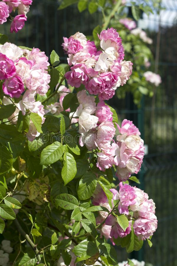 Nam mooie bloem toe stock afbeelding