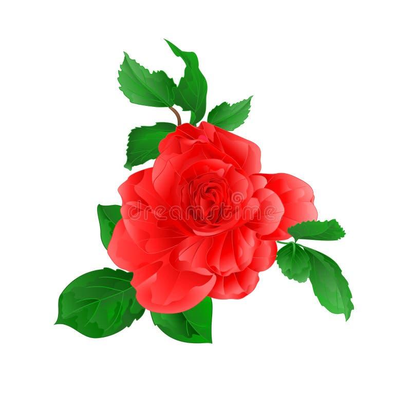 Nam roze met knoppen toe en verlaat natuurlijke waterverfwijnoogst op witte vector editable illustratie als achtergrond vector illustratie