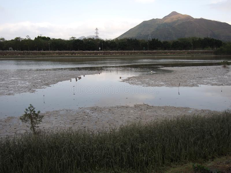 Nam Sang Wai Wetland fotos de archivo