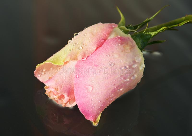 Nam, symbool van liefde toe stock foto
