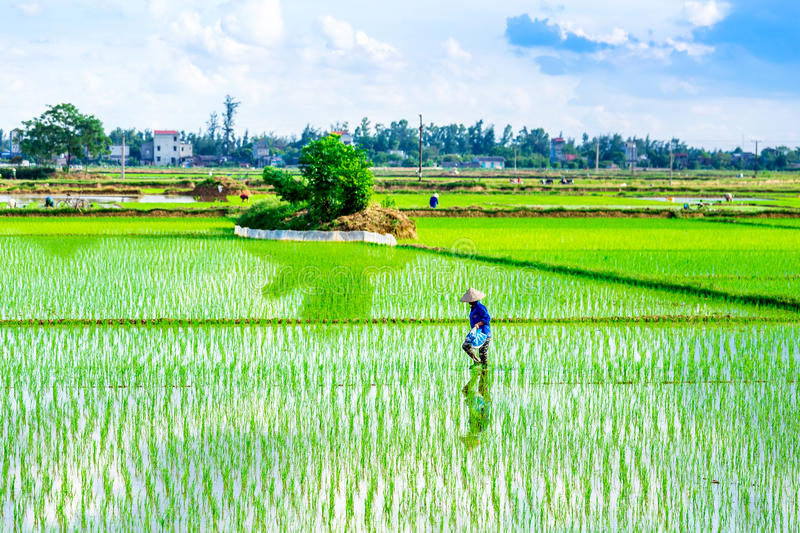 NAMDINH, VIETNAM - JULY 13, 2014 - An unidentified woman working on the fields. stock images