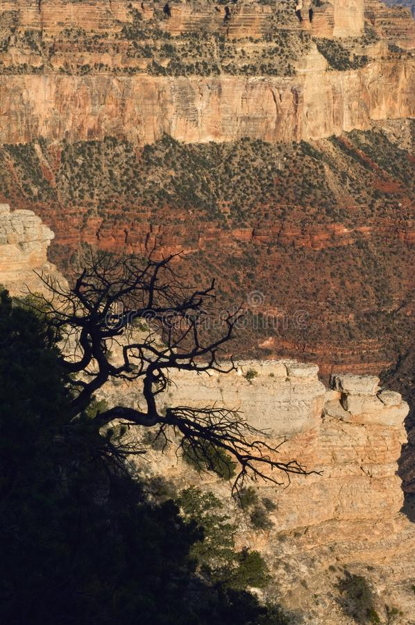 A silhouetteof a tree contrasts against the sunbaked layers of the Grand Canyon. Named a UNESCO World Heritage Site in 1979, the Grand Canyon National Park is stock photo