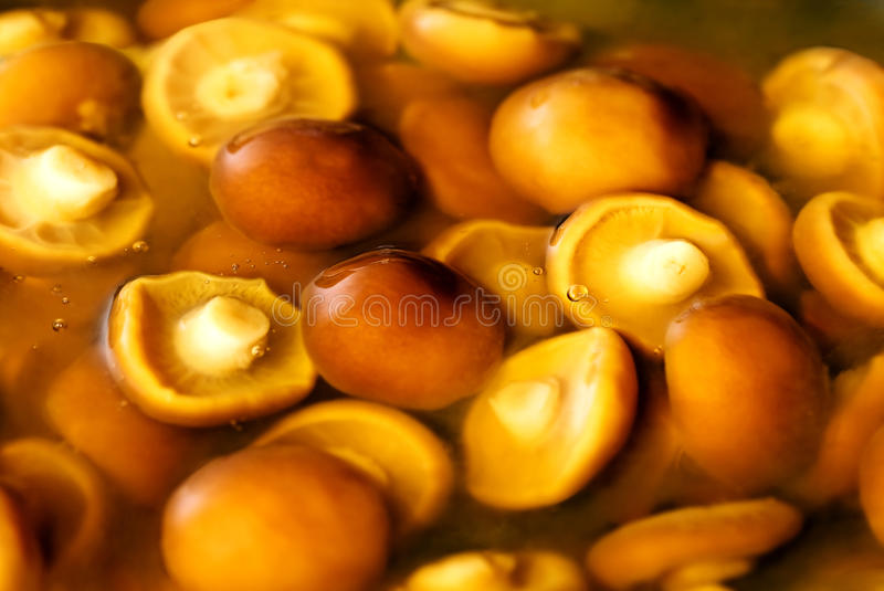 Nameko mushrooms royalty free stock image