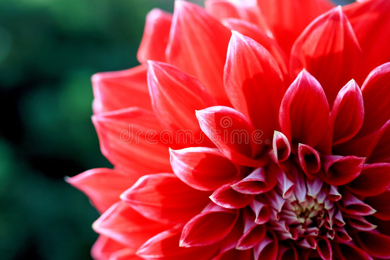 Nameless flower close up stock images