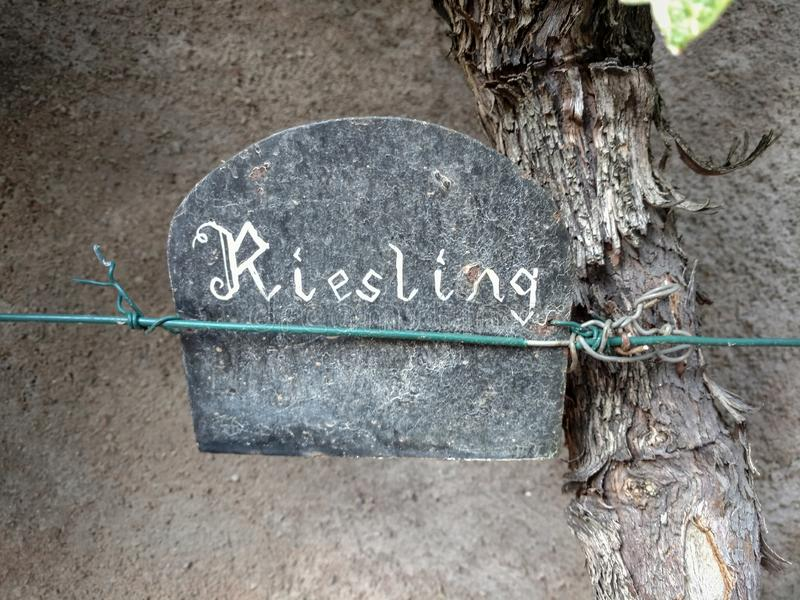 Nameplate of kind of grapes Riesling written with a chalk royalty free stock images