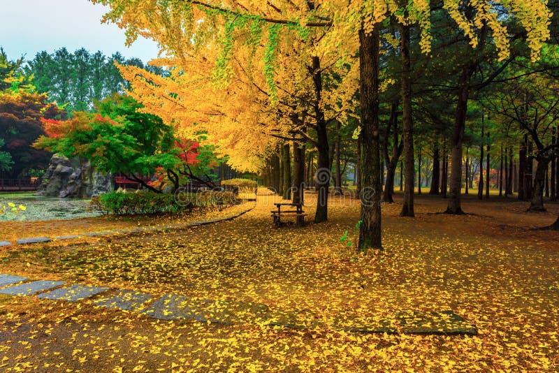 Nami island in autumn royalty free stock photos